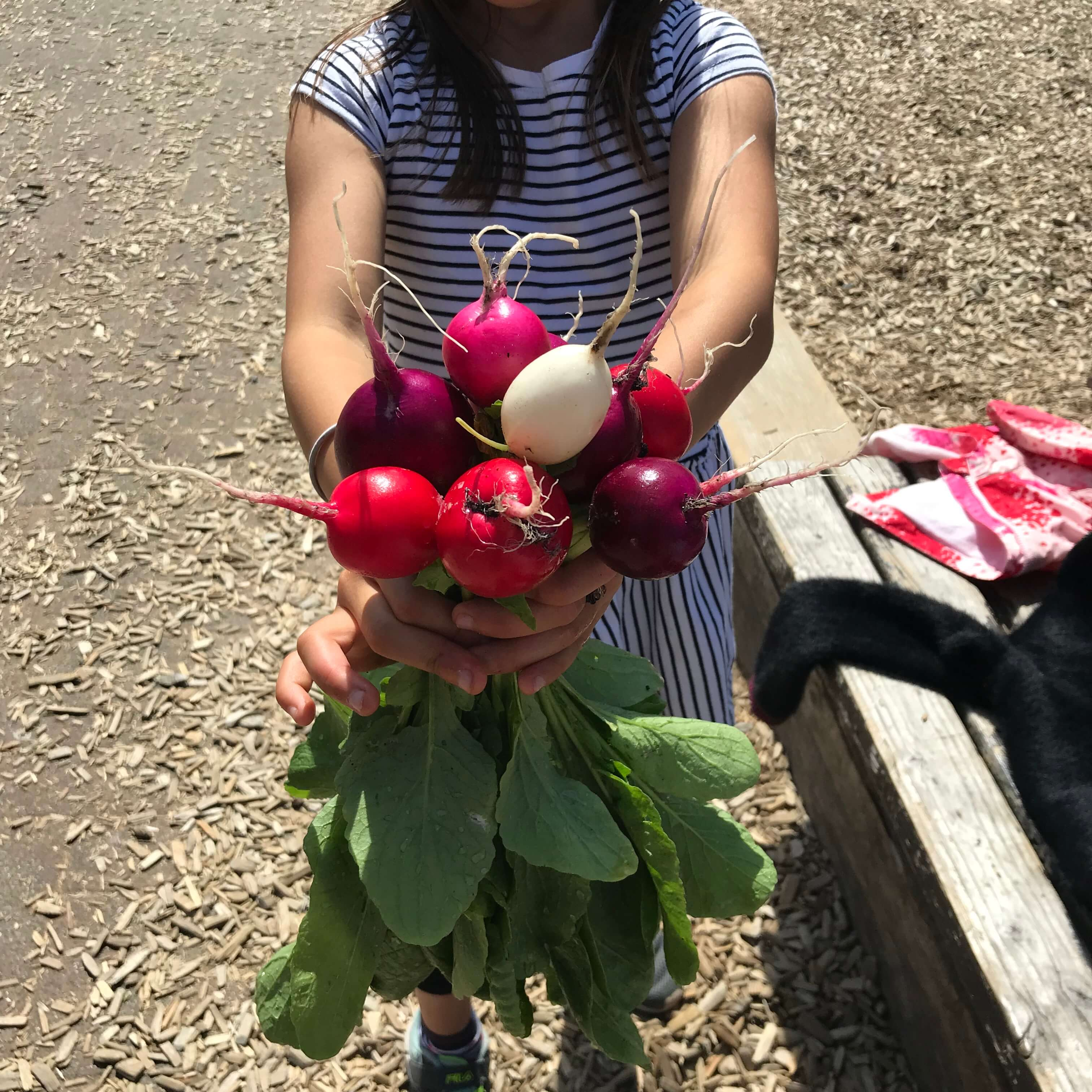 Child holding bunch of beets